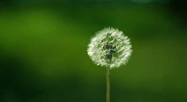 Onkruid Voorkomen En Bestrijden Op Natuurlijke Wijze
