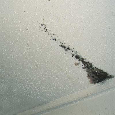 Hoe verwijder je schimmel van het plafond?